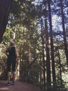 Muir Woods, North CA